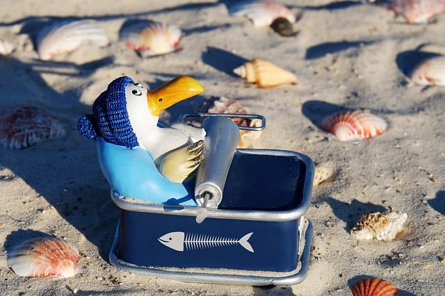 bird and sardines