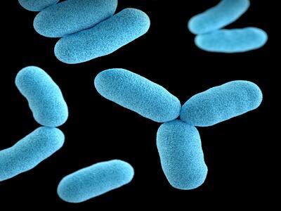 Biological image of bacteria